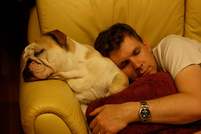 Studies suggest that animals dream too. Their brain waves during sleep appear very similar to human's when dreaming.