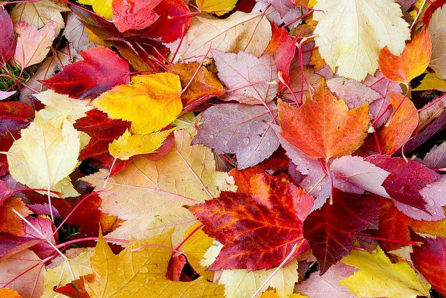 Autumn leaves make beautiful fall crafts.