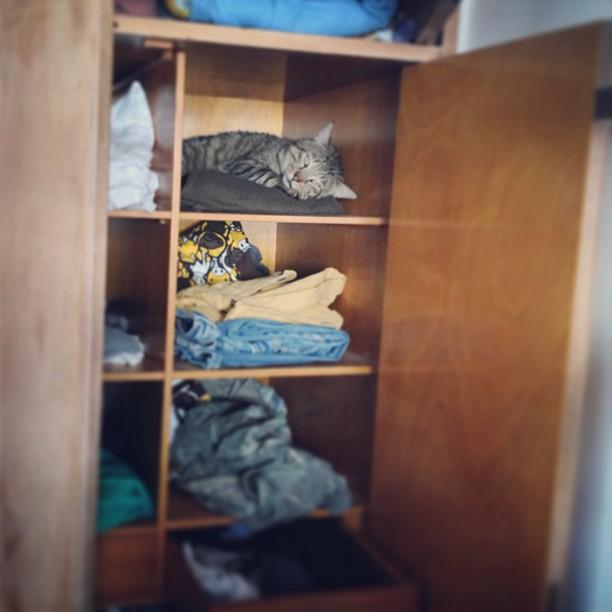 Quick Tips For Organizing Closets and Pantries